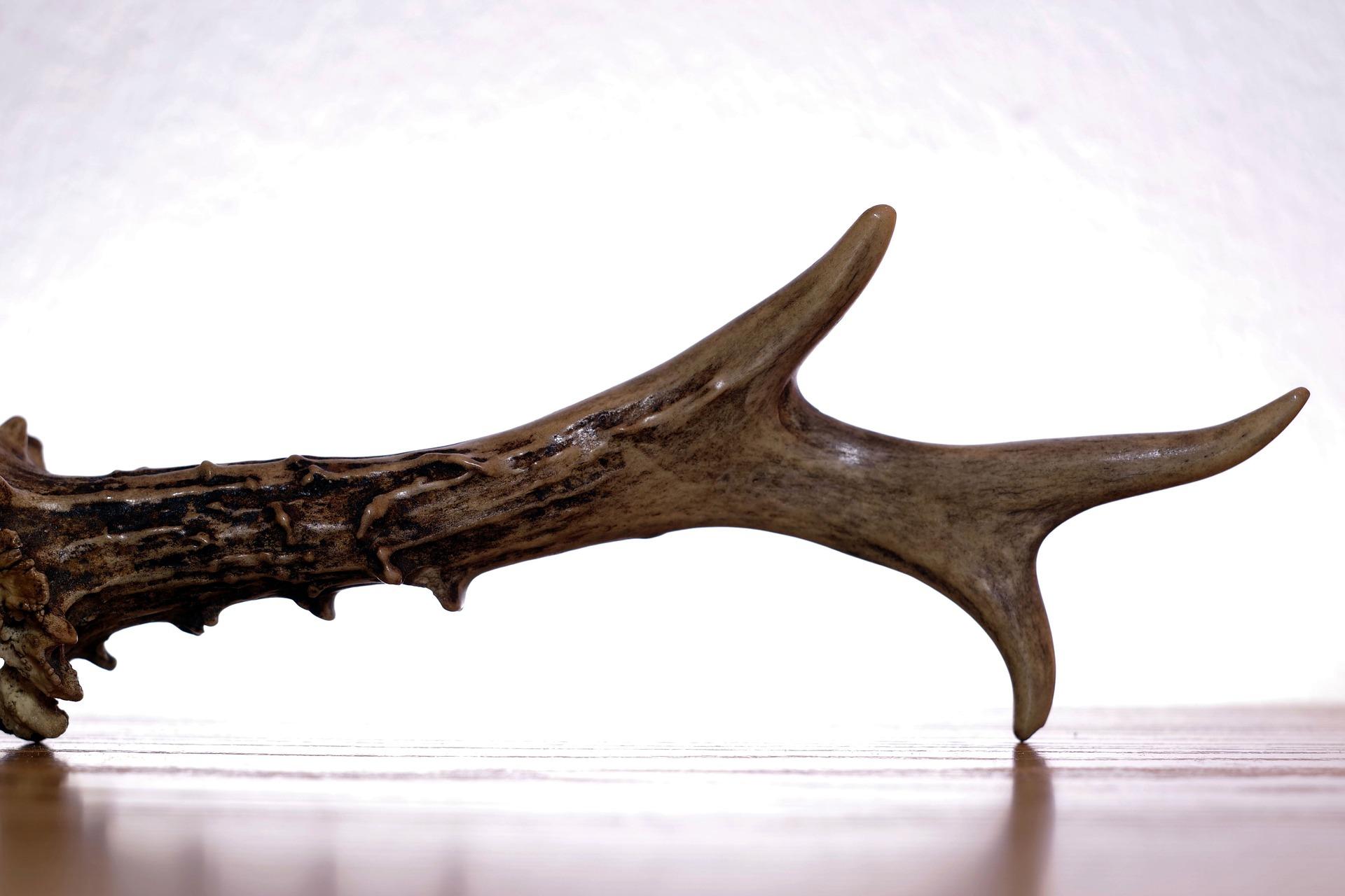 Corna, ossa o manufatti possono diventare potenti amuleti