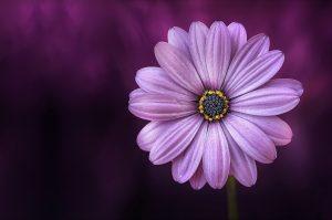 Meditazione del Fiore