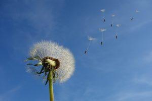Meditazioni fiori e aria