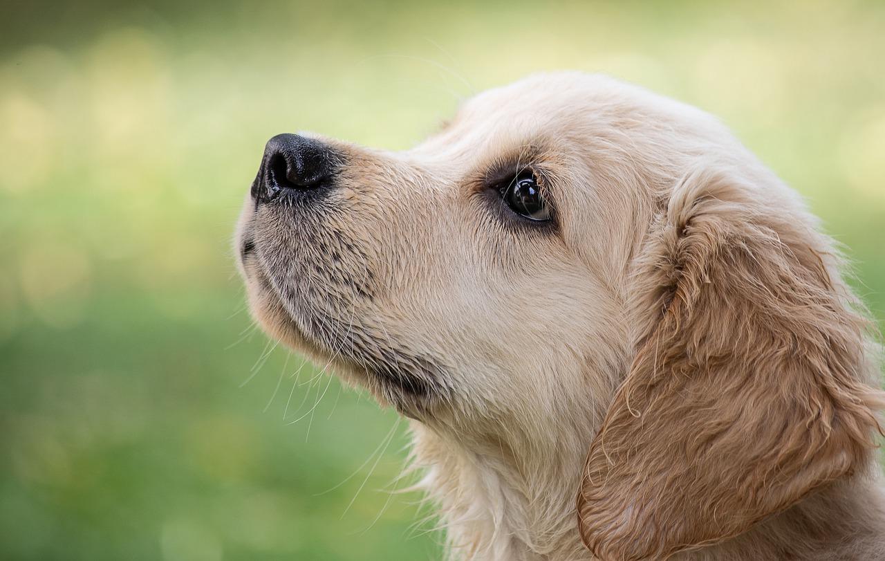 Se c'è un'anima per gli animali, se c'è uno spirito per gli animali, questo c'è prescindere dal rapporto benevolo che noi possiamo avere con loro, è più un sistema di credenze spirituali e divine.